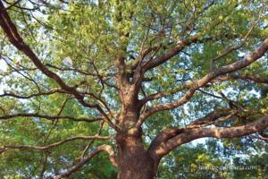 生命力のある樹